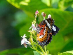 Belajar Kepemimpinan dari Kupu-kupu